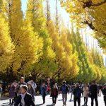 【東京】人!人!!人ぉー!!大混雑の神宮外苑いちょう並木を見に行ってきた。