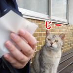 【熊本・阿蘇】女一人旅!美味しいものに誘われてアレもやって来た!阿蘇神社で食べ歩き!(2021年3月)